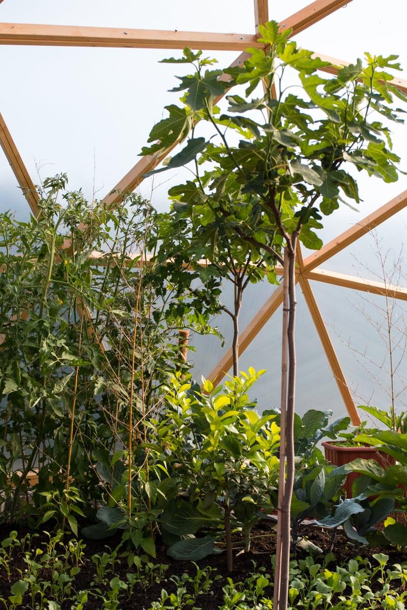 Erfahrungsbericht - FUTURUM DOMES Bausatz Constans (Teil 3) - Dome Feigenbaum