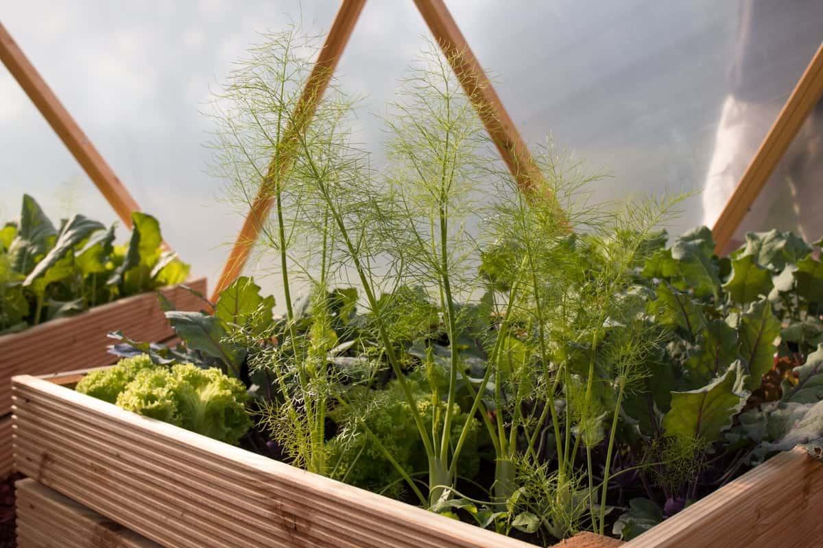 Greendome-Gemüse