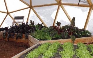 Erfahrungsbericht - FUTURUM DOMES Bausatz Constans (Teil 4) - Greendome garten im winter