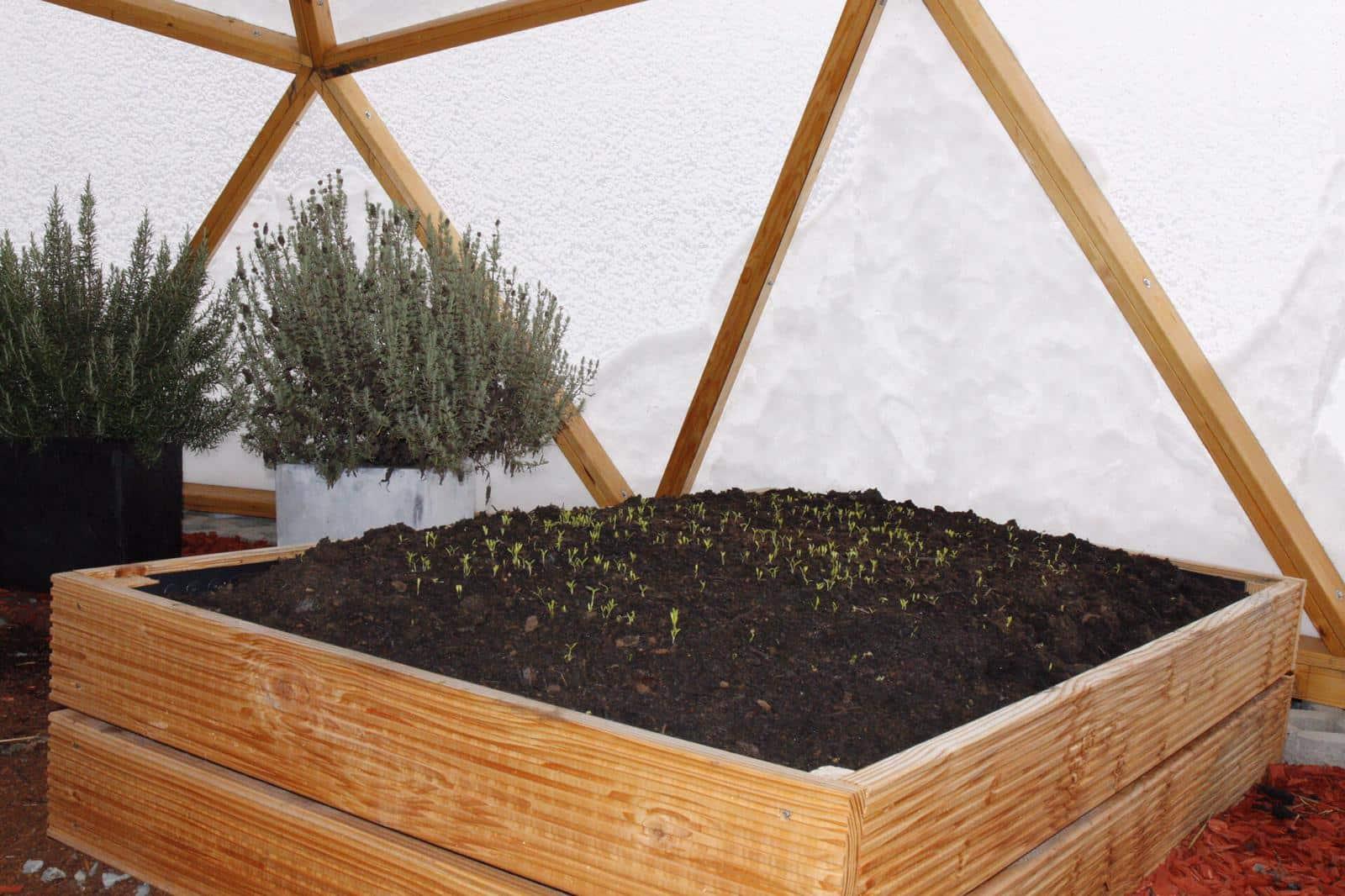 Erfahrungsbericht - FUTURUM DOMES Bausatz Constans (Teil 4) - Greendome koriander winter